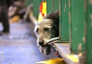 В городах Украины проходит марш против убийств бездомных животных