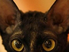 На путях киевского метро поселилась кошка