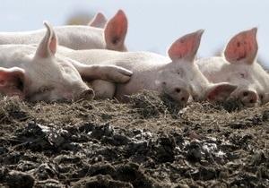 В Херсонской области неизвестные в масках похитили с фермы пять свиней, четырех быков и козу