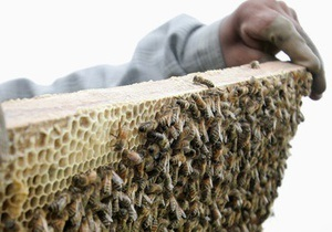 Поляк после укуса пчелы очнулся в гробу