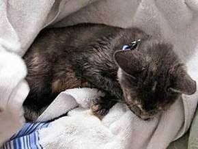 Американец был арестован за попытку успокоить котенка марихуаной