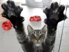 Исследование: Кошки оказались правшами, коты - левшами