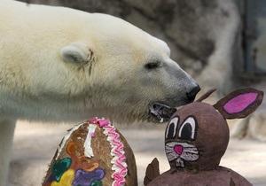 В Буэнос-Айресе скончался символ местного зоопарка - медведь Виннер
