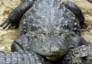 В Австралии крокодила, съевшего двух самок, выгнали с фермы