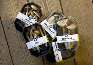 Галлюциногенные грибы нарушают кровообращение мозга