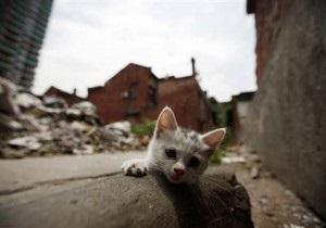 В Одессе против молдаванина возбудили дело за избиение котенка