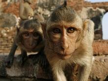 Американские студенты производят подсчеты на уровне обезьян