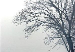В Черкасской области из-за падения дерева погиб ребенок