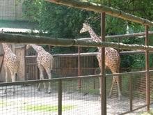 В Киевском зоопарке ежедневно будут давать бесплатные представления