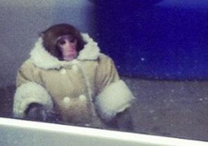 Канадской обезьяне из IKEA нашли новый дом