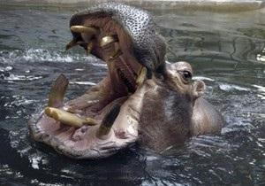 В Черногории из зоопарка уплыла двухтонная самка гиппопотама