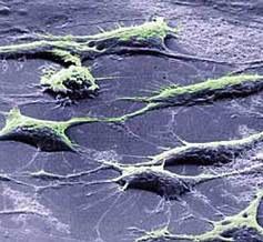 Ученые разработали безопасный метод получения стволовых клеток