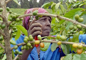 Цена на кофе поднялась до максимума за последние 12 лет