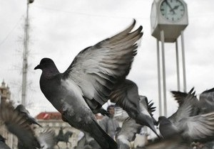 В Коктебеле мошенники использовали для афер голубей