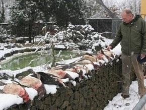 В немецком зоопарке лиса убила 13 пингвинов
