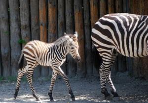 Киевский зоопарк просит не спекулировать на теме гибели животных