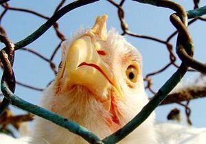 Британские ученые решили спор о курице и яйце