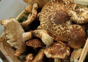 В Херсонской области семья отравилась грибами