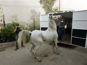 В России лошадь на полном скаку врезалась в Газель