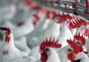 Украина продлила антидемпинговое расследование импорта мяса птицы из США