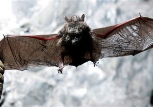Ученые: Летучие мыши умеют дружить