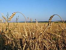 ООН: Урожайность в тропических регионах сократится на 50%