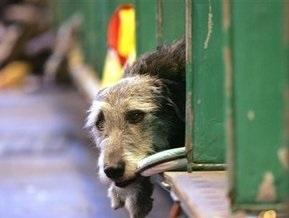 Пятеро россиян заразились трихинеллезом, съев собаку