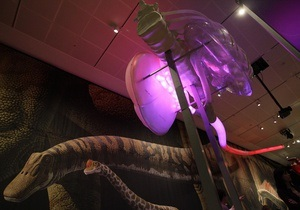 Американские ученые создали интерактивную модель одного из крупнейших динозавров