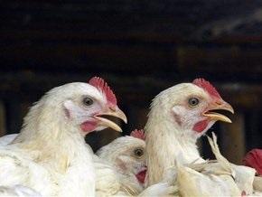 В Гонконге обнаружена зараженная птичьим гриппом мертвая птица