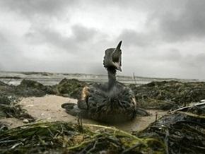 ООН и Еврокомиссия оценили убытки Украины от разлива нефти в Керченском проливе в $29 млн