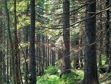 Причиной потопа на западе Украины экологи называют вырубку лесов
