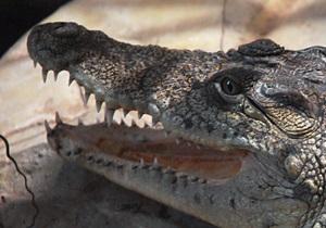 В Ялте крокодил напал на трехлетнего мальчика