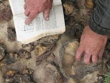 Пенсионер из Донбасса, возможно, отыскал неизвестную цивилизацию