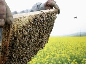 Пчелы оказались способными распознавать человеческие лица