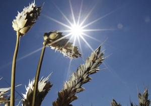 Ъ: Стоимость пшеницы в Украине достигла максимума за год