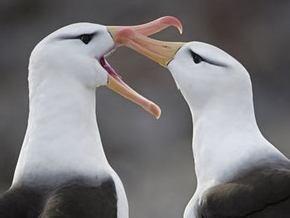 Ученые назвали гомосексуализм среди животных двигателем эволюции