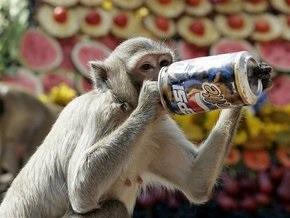 Стая диких обезьян вызвала панику в столице Алжира