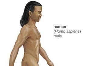 Китайские ученые: Homo Sapiens происходит из Китая