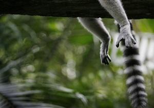 Ученые полагают, что треть вымерших млекопитающих могут оказаться живыми