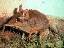 Зоологи обнаружили неизвестный науке вид млекопитающих