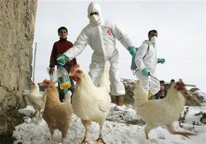 Птичий грипп оказался более заразным, чем считалось ранее - медики