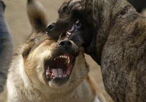 Депутат предложил запретить в Украине собачьи бои