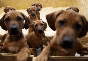 Собаки - Российские ученые определили происхождение современных собак