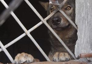 В Донецке поймали волка