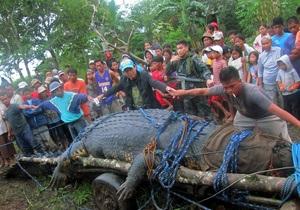 На Филиппинах поймали гигантского крокодила весом более тонны