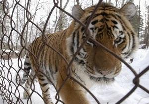 В китайском зоопарке от голода умерли одиннадцать редчайших тигров