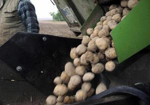 Израильские ученые создали батарею  на основе вареного картофеля