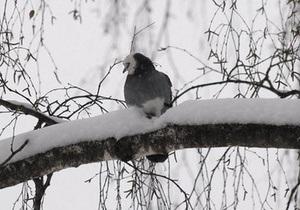 В Червонограде пожарные спасли голубя