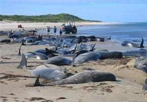 В Новой Зеландии на берег выбросились 82 черных дельфина