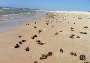 С литовских пляжей уберут почти 80 тонн мертвых майских жуков